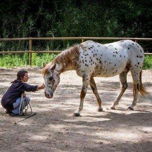 Retiro con caballos