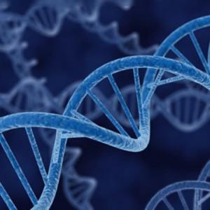 El efecto de la meditación en los genes