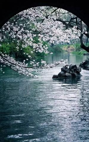 La belleza del silencio