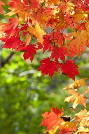 """""""Las hojas caen... Vida Nueva"""""""