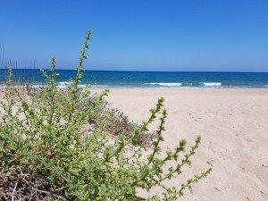 14 días de Yoga terapia y meditación en la playa en la playa de Cullera