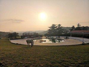 Naturaleza y Vida: Yoga, Silencio y Caballos