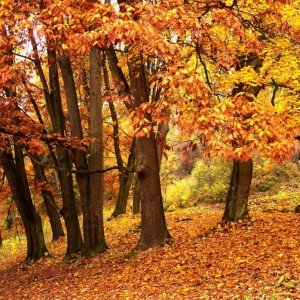 Bosque de Silencio